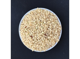 Japonica brown rice